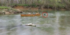 Cachorros presos em canoa desesperados, salvos por outro amigo de 4 patas!!!