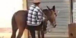 Se beber, não tente subir no cavalo kkk, compartilhe em seu Facebook!