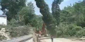 Homem leva surra de árvore, vai vendo essa natureza revoltada!