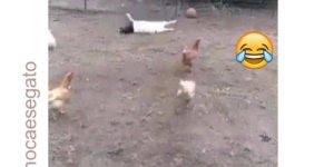 Bode finge desmaio quando a bola vai para perto dele, te lembra alguém?