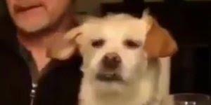 Cachorro virando olho de ranço de uma pessoa hahaha, quem nunca?