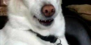 Video do cachorro que manda recado para quem está no Whatsapp!