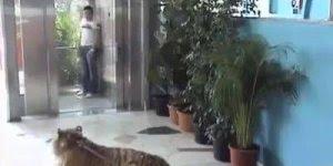 Pegadinha com tigre na saída do elevador deixa as pessoas em pânico kkk!