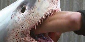 Pegadinha do tubarão vivo na peixaria, que susto hein, confira!