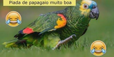 Piada de papagaio, você vai rir da piada e da risada hahaha!