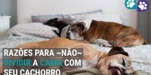 10 Razões para não dividir sua cama com seu cachorro, confira!