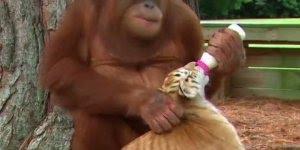 A bondade no mundo animal, temos muito o que aprender com eles!