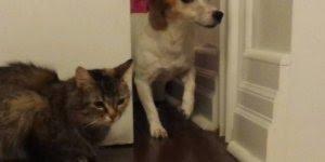A infinita guerra entre cães e gatos, será que um dia irá acabar?