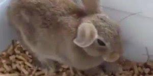 Animais tendo crise de sono, um mais engraçado que o outro!