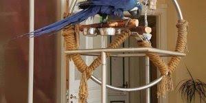 Arara azul, quem gostaria de ver uma dessa de perto levanta a mão!