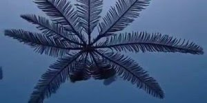 Bicho do mar que parece uma palmeira, que estranho hein, confira!