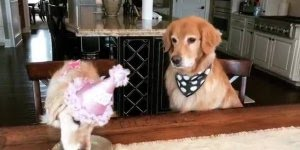 Cachorrinha comemorando aniversário, olha só a carinha do amigo do lado!!!