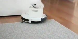 Cachorrinho andando em cima do limpador de chão, olha só a carinha dele!!!