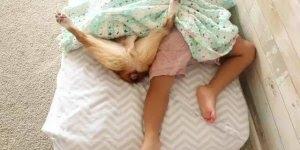 Cachorrinho dormindo com seu melhor amiguinho, olha só que paz!!!