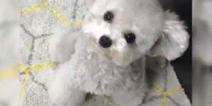Cachorrinho mais fofinho que você já viu na vida, vale a pena conferir!!!