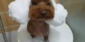Cachorrinho na hora do banho, que momento mais fofo, confira!
