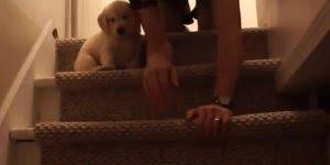 Cachorrinho tem medo de descer as escadas, veja que dono mais amoroso!!!