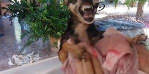 Cachorrinho tomando banho, esse barulho dá é medo na gente hahaha!
