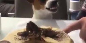 Cachorrinho vigiando bolo - Veja o que ele faz hahaha!!!