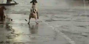 Cachorro alegre se divertindo com a água da chuva que esta caindo das calhas!!!
