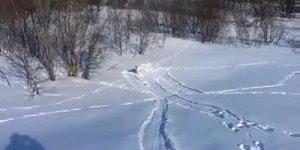 Cachorro brincando na neve, veja como eles gosta é muito engraçadinho!!!