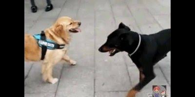 Cachorro capoeirista, por essa você não esperava hahaha!