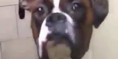 Cachorro desconfiado, ele vira os olhos, mas nem se mexe hahaha!