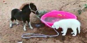 Cachorro e cavalinho, uma dupla muito inusitada de se ver!