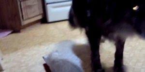 Cachorro e gato, uma amizade baseada em amor e ódio, confira!