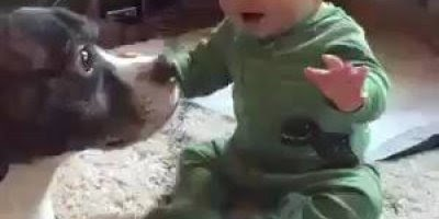 Cachorro fazendo a festa com um bebê, que alegria que deixam a casa!