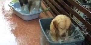 Cachorro fazendo a festa na bacia cheia dágua, olha só a alegria!!!