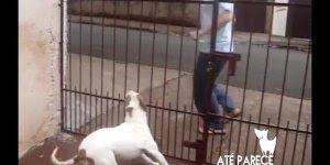 Cachorro fica desesperado quando seu dono sai de casa, confira!