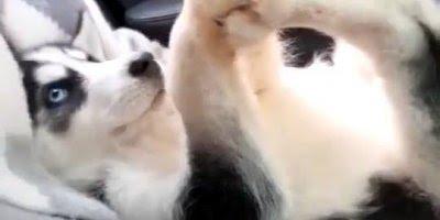 Cachorro Flexível, até ele sabe da importância de se alongar hahaha!