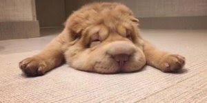 Cachorro fofo e seu nariz, alguém pode explicar o que ele tem? kkk!