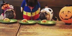Cachorro guloso, veja a carinha dos quem ficam sem comer nada!
