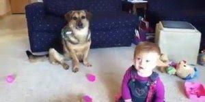 Cachorro mordendo bolas de sabão e bebê dando risadas, confira!