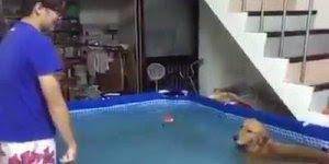 Cachorro não quer sair da piscina de forma alguma, também neste calor, hahaha!!!