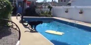 Cachorro puxa prancha na piscina só para poder pegar sua bolinha!!!