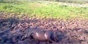 Cachorro que ama lama, parece mais porquinho, veja a felicidade, kkk!!!