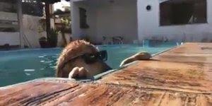 Cachorro só curtindo uma piscina, olha só a pose dele de playboyzinho !!!