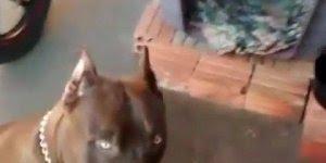 Cachorro super obediente, ele só como quando seu dono deixa, confira!!!