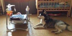 Cachorro uiva enquanto bebê chora, muito fofo, confira!