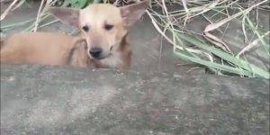 Cachorro vai até os policiais para pedir ajuda para outro cachorro machucado!
