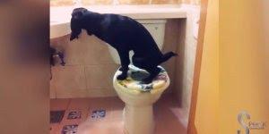 Cachorros fazendo coisas engraçadas, impossível não rir com eles!