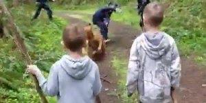 Cachorros levando sustos, impossível não rir desse video de animal!