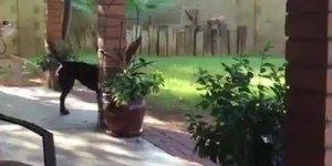 Cachorros procurando seus donos, é muito fofinho de ver esta galerinha!!!
