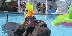 Cachorros que adoram estar na piscina, veja como eles se divertem!!!