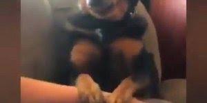 Cachorros que nos fazem rir com situações super engraçados!!!