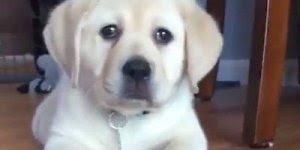 Cachorros recebendo e dando carinho, é muito amor envolvido!!!