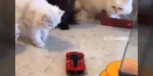 Cachorros versus gatos, as diferenças entre um e outro, vale a pena conferir!!!